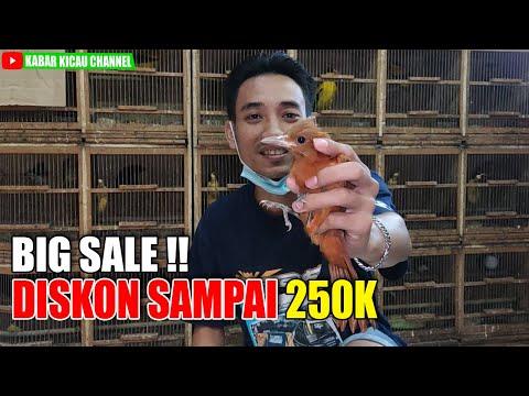DISKON UP TO 250K ! Obral Harga Burung Masa PPKM Darurat Kios Edie Jovanis Pasar Pramuka