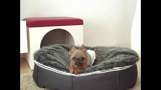 Мягкая лежанка для собаки от Pet Lounge