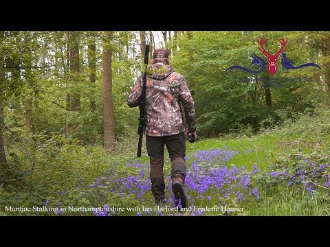 Muntjac Stalking in Northamptonshire with Ian Harford and Frederic Hanner
