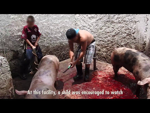 The Mexican Government Owns Slaughterhouses (And They