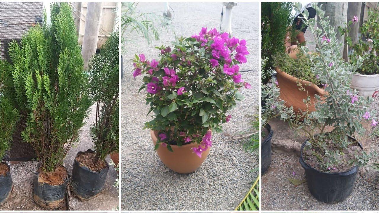 Muitas Plantas Novas para o Hortinho+ Mores Viajou