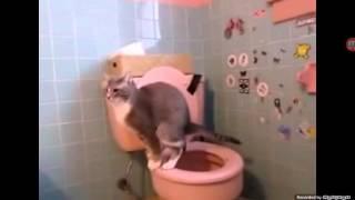 Кот который пердит •_•