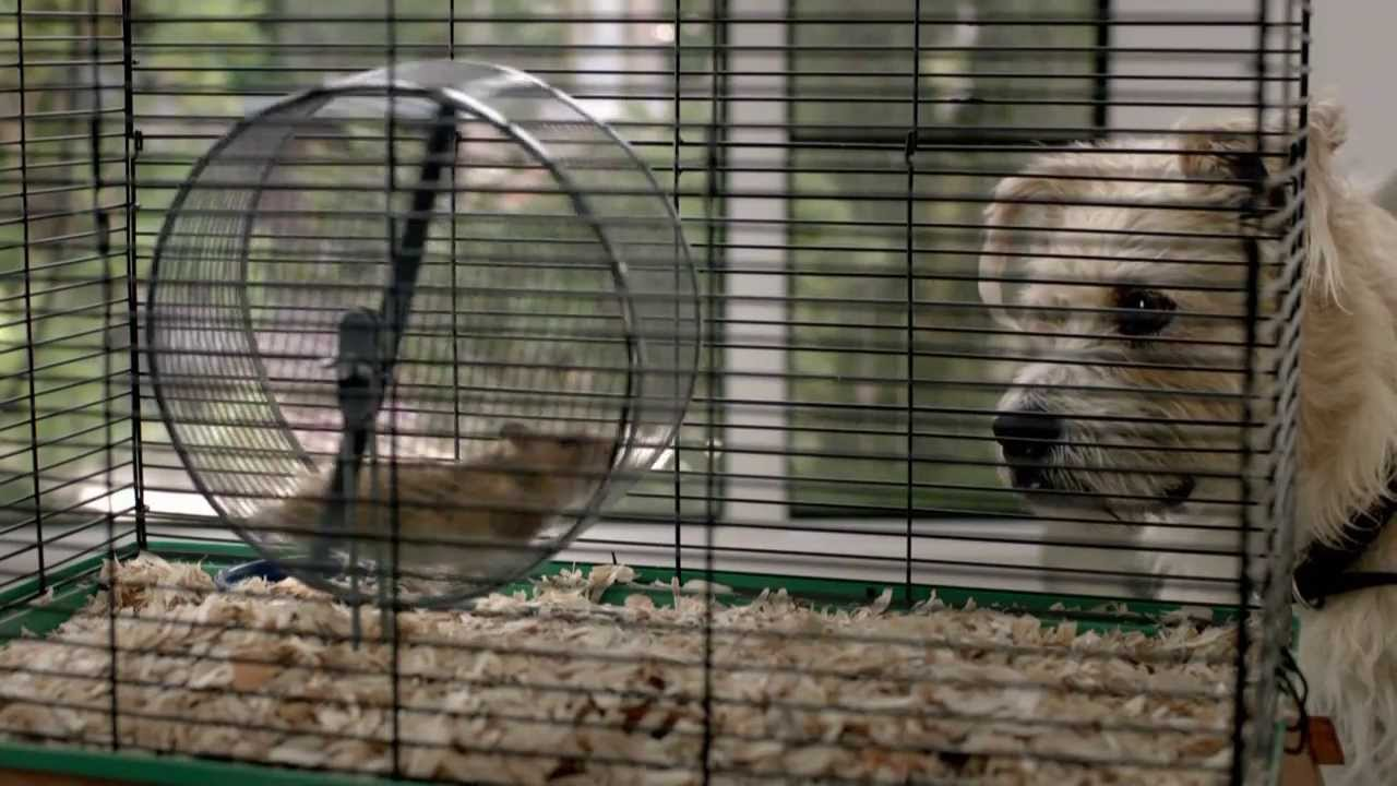 Ebay Werbung Hamster Hund 2013 Hd Youtube
