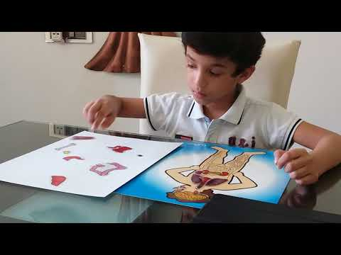 Moksh's Human Digestive System Activity with Stickers
