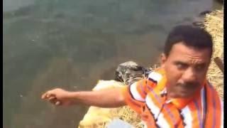 اجمل سمكة فى النيل ممكن تشوفها