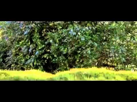 Ammakuruvi| Pattinte Palazhi