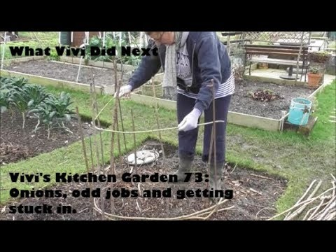 Vivi's Kitchen Garden 73: Onions, odd jobs and getting stuck in.