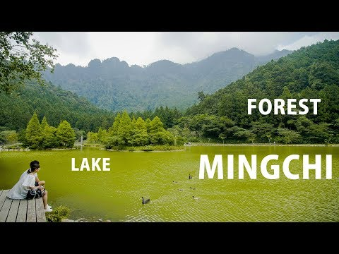 🌄TRIP TO MINGCHI, with FROGS and VIOLIN PLAYER MAKING MUSIC (北橫拉拉山/明池)