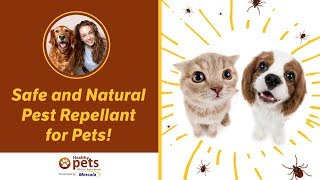 A Safe and Natural Pest Repellant for Pets!