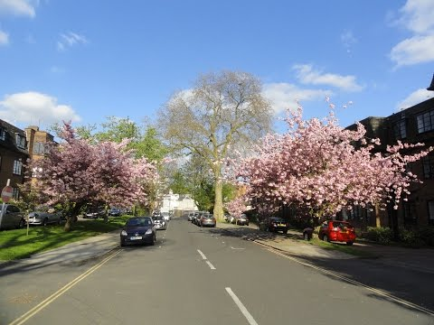 The Beautiful Glory of Springtime Flower & Tree Blossom in London, Great Britain.