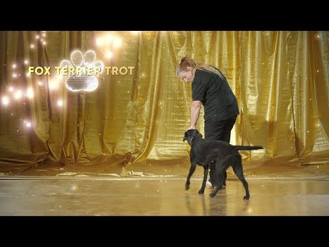 Chow Chow Chow - Dancing With Dogs