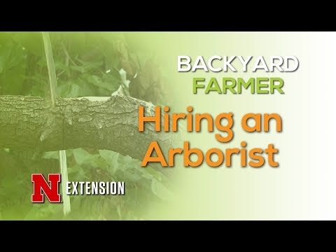 Hiring an Arborist