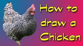 How to draw a chicken plus a question!