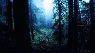Звуки Ночных Джунглей