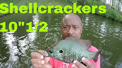 Cam's Crappie Hole  ** USING LIVE WORMS TO CATCH SHELLCRACKERS** (BEDDING)