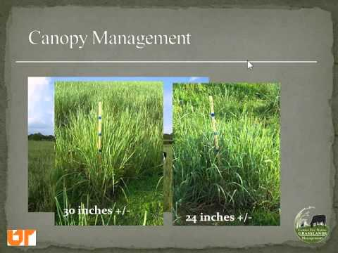 Using Native Grasses for Livestock in the Eastern US