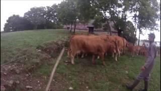 journée à la ferme