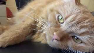 СП Мои любимые коты 1 отчёт Dimensions Kitty litter + моя кошка Мика