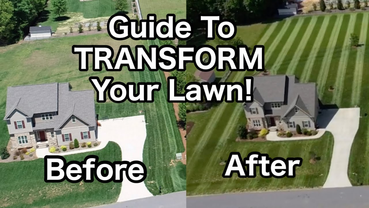 How To Transform a Neglected Lawn | Before and After Lawn Results