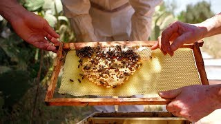 Beekeeping in Algeria