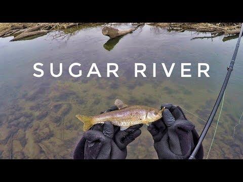 Sugar River Fly Fishing turns into Multispecies Trip
