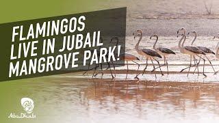Discover natural beauty at Jubail Mangrove Park