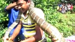 فن و منوعات  بالفيديو.. إنقاذ كوبرا في محمية للنمور بالهند