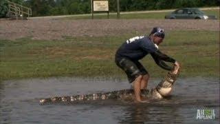 Gators Take Over Flooded Field | Gator Boys
