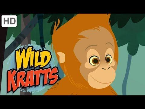 🐒 Wild Kratts - Swinging with the Monkeys   Kids Videos
