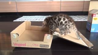 10秒後のハプニング! ふたが閉まってびっくり!な子猫の表情に注目
