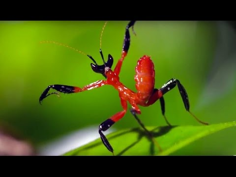 The Amazing Natural World – 1 Million Subscriber Celebration – BBC Earth