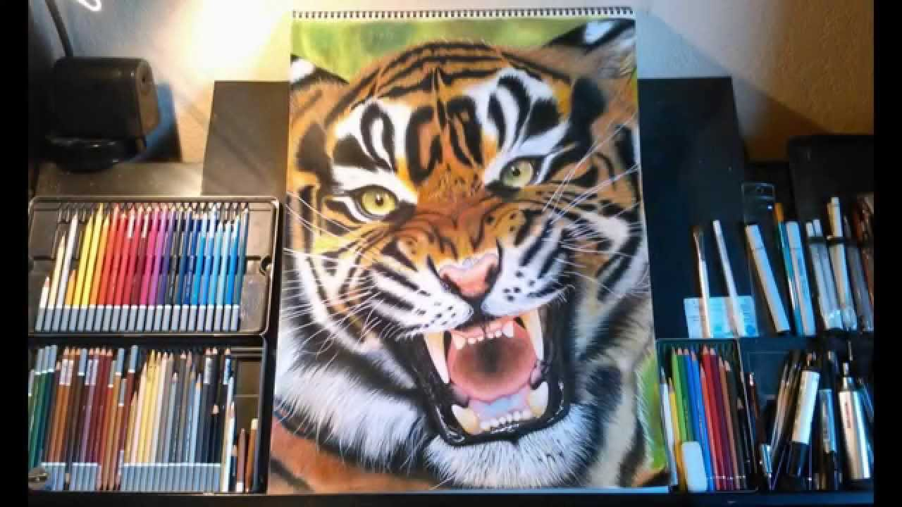 Drawing a tiger color pencils carbothello pencil faber castell