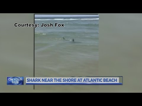 VIDEO: Shark swims close to shore at Atlantic Beach