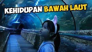 Mengenal Kehidupan Bawah Laut | Seaworld Jakarta
