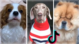 These Cute Dogs Will Put You in a Happy Mood