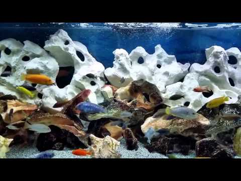 180 gallon african cichlid fish tank with universal rock