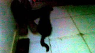 kucing .mp4