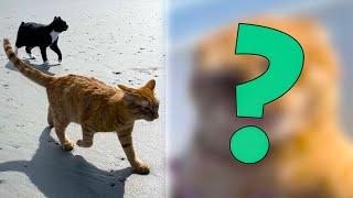 Кот впервые оказался на пляже и состроил гримасу, от которой люди потеряли дар речи