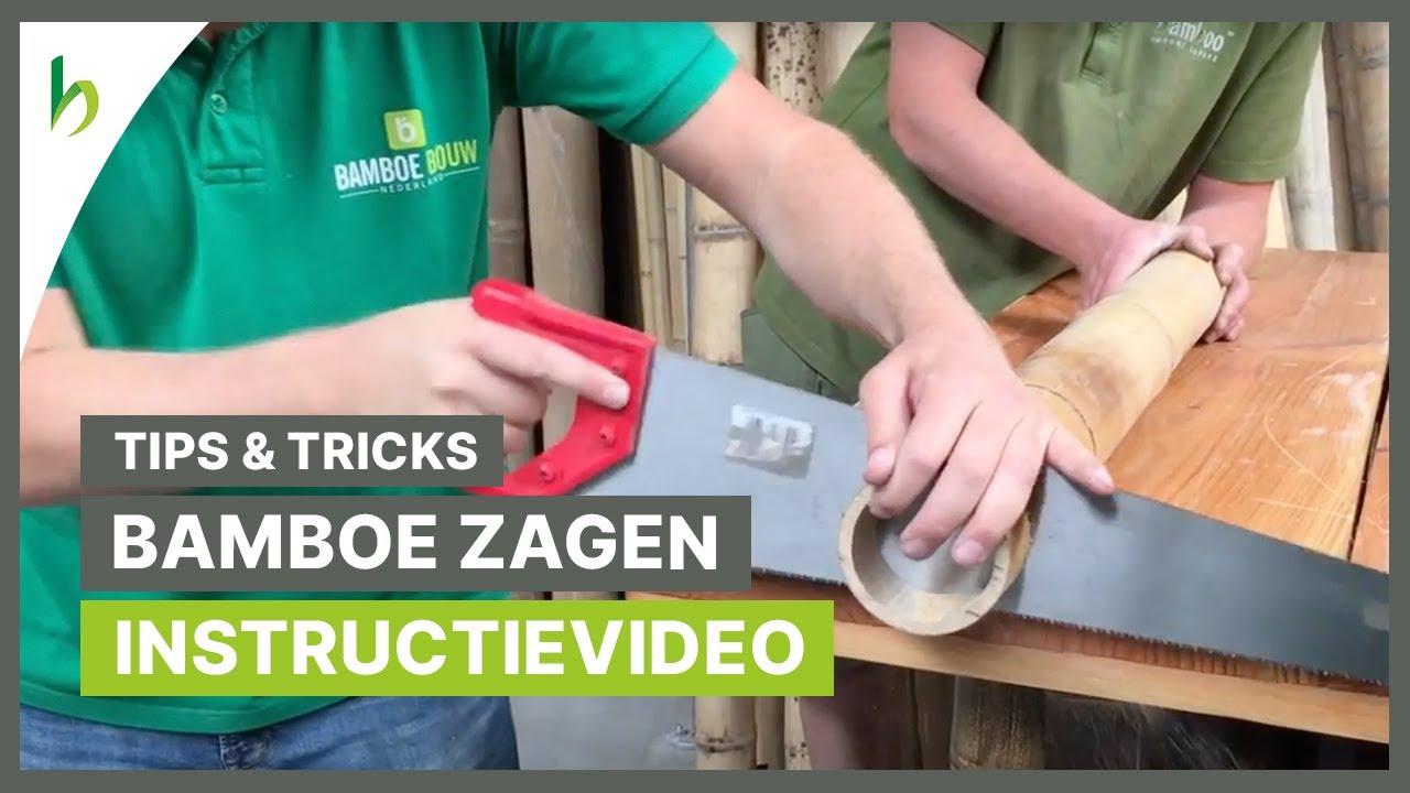 Hoe Bamboe Zagen