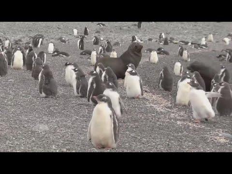 Greenpeace scientists propose Antarctic wildlife sanctuary