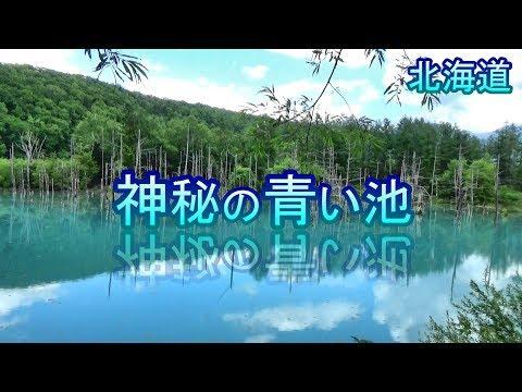 【北海道旅】神秘の青い池の真実【美瑛観光】