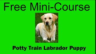 **hoot** Potty Train Labrador Puppy - Free Mini-course On Potty Train Labrador Puppy