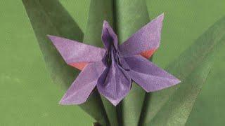 Origami Munich Orchid (HD)- زهرة الاوركيد