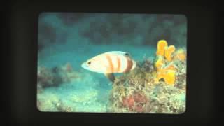 TSG goes Kroatien   Insel Cres mit Diving DE 360p1