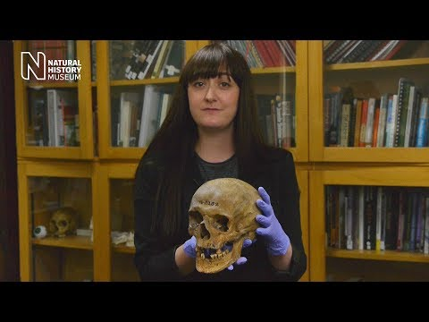 Analysing the bones: what can a skeleton tell you? | Natural