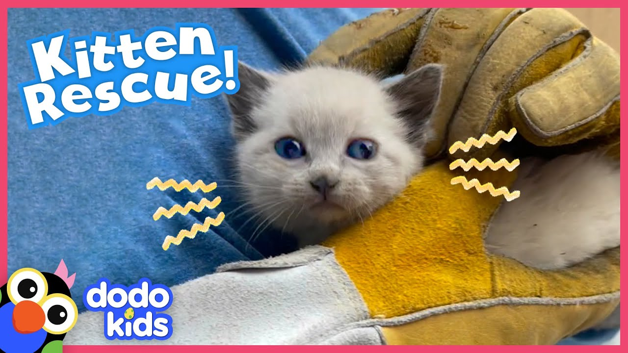 Tiny Kitten Rescued From Roof Loves Snoozing On Shoulders | Rescued! | Dodo Kids