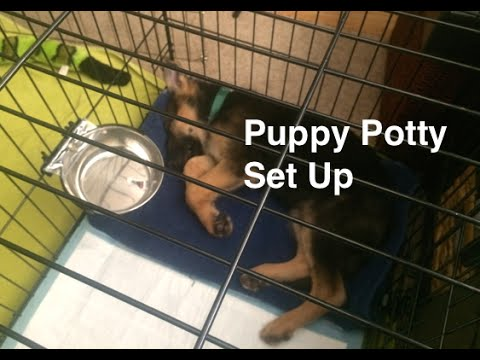 Puppy Potty Set Up and Training