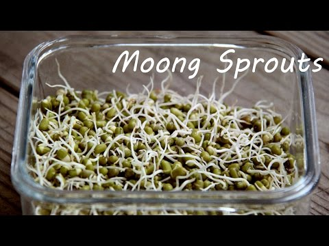 How To Sprout Moong Mung Beans At Home