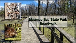 Maumee Bay State Park Boardwalk Wildlife