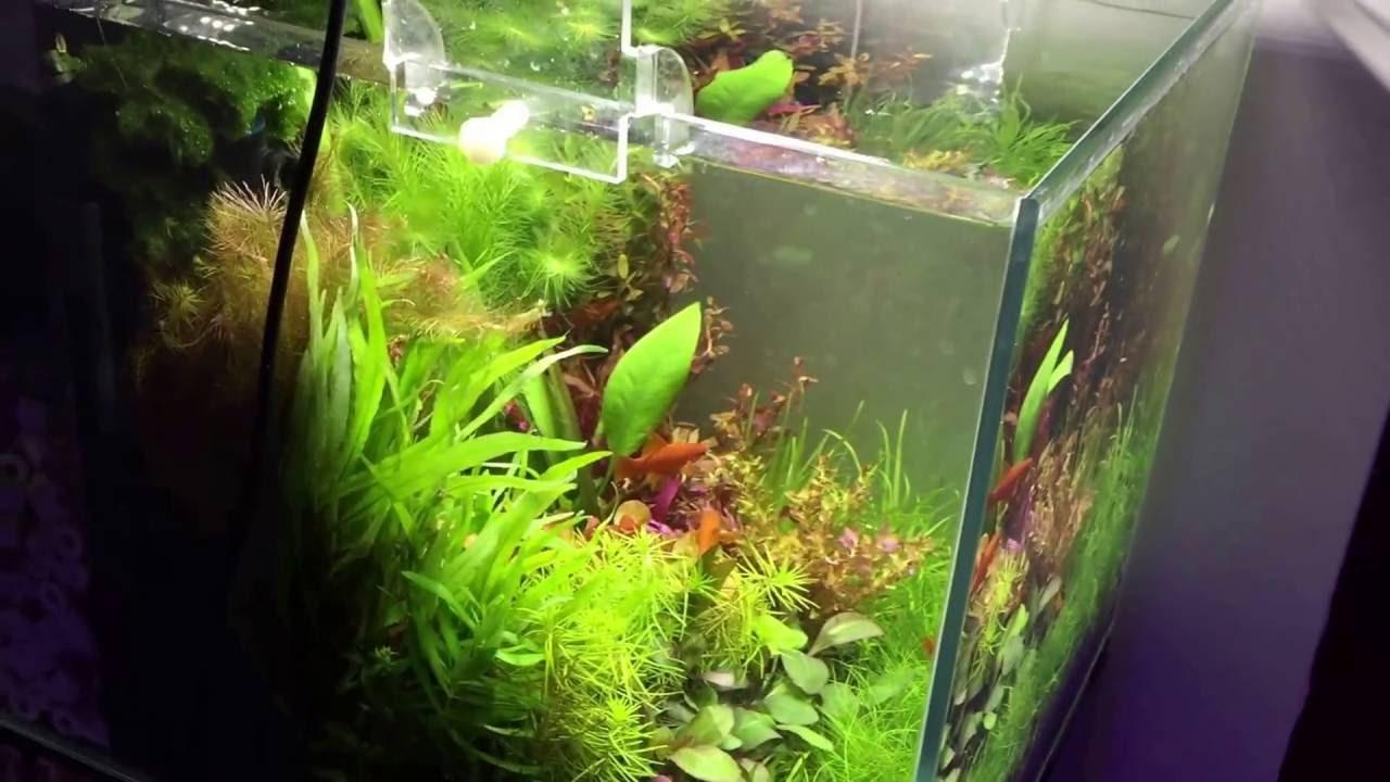 Combo big fish start argus aquarium design garden for Garden aquarium design